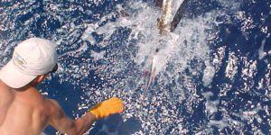 Sport Fishing Yacht - The Miss Kethleen II